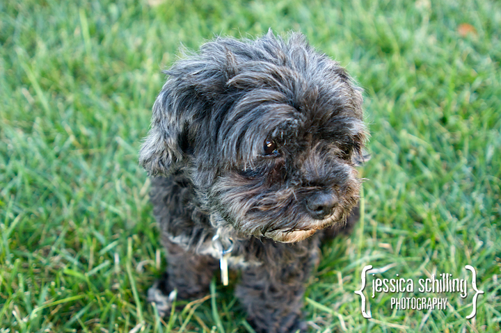 Natural and adorable dog portraits from Los Angeles pet photographer