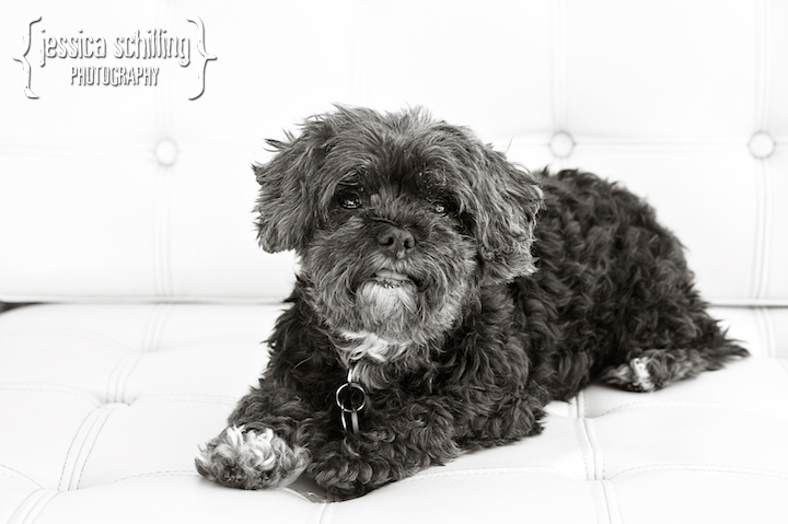 Classic artistic black and white photography of your pets in Los Angeles