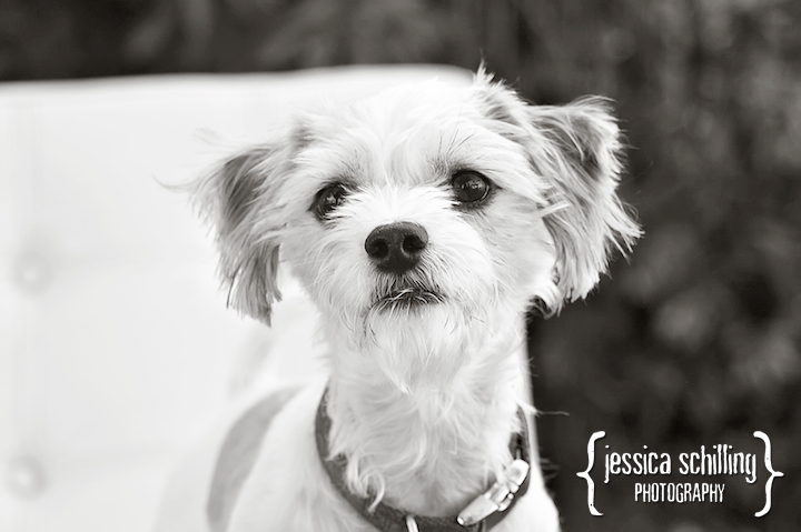Modern art pet photography in Black and White by Los Angeles photographer Jessica Schilling