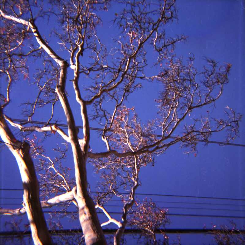 Blue and Pink nature shot of tree on toy camera film