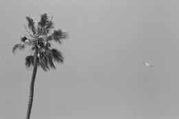 Venice Beach modern artistic street photography of seagull and palm tree by Jessica Schilling