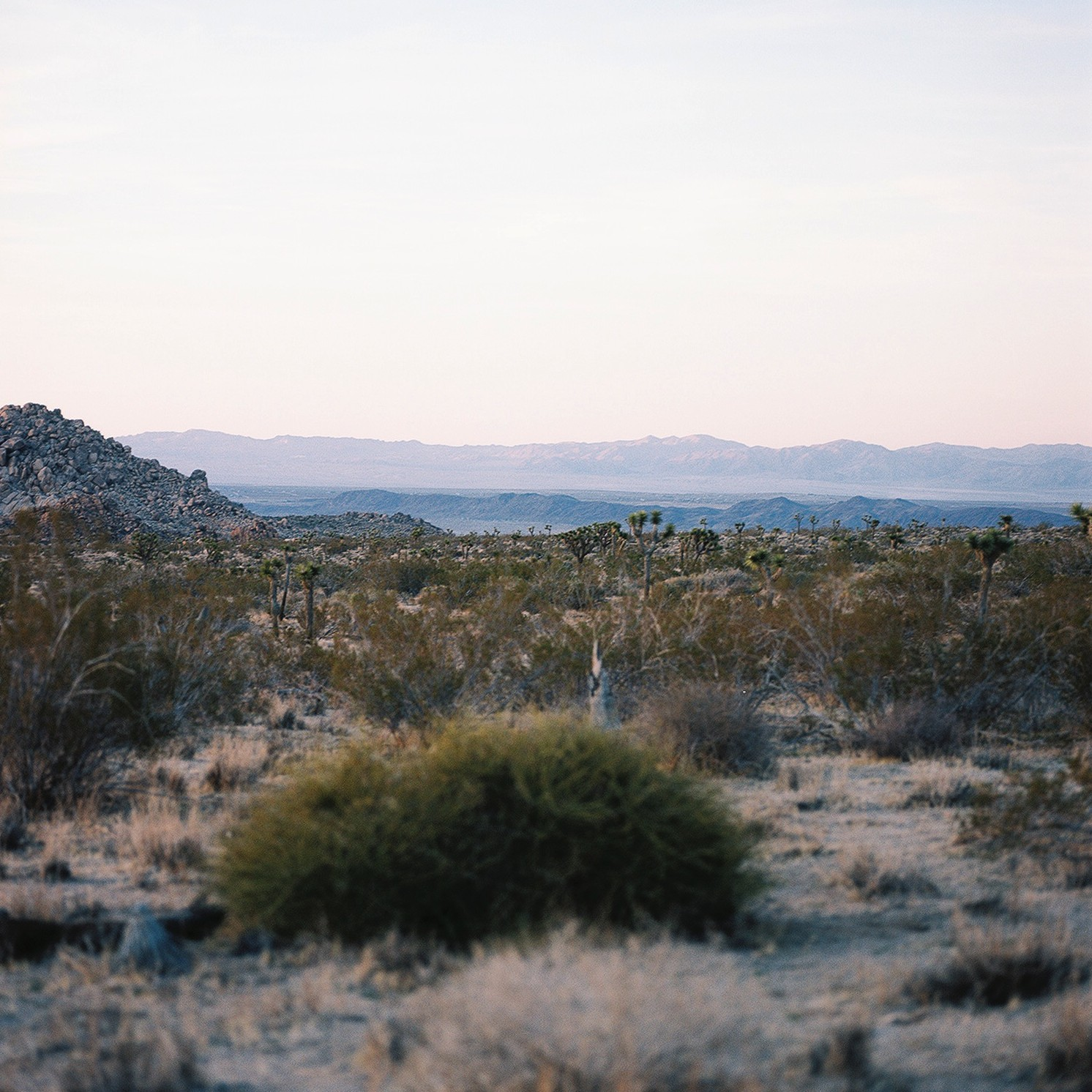 hasselblad medium format film travel photography of Joshua Tree dessert by Jessica Schilling