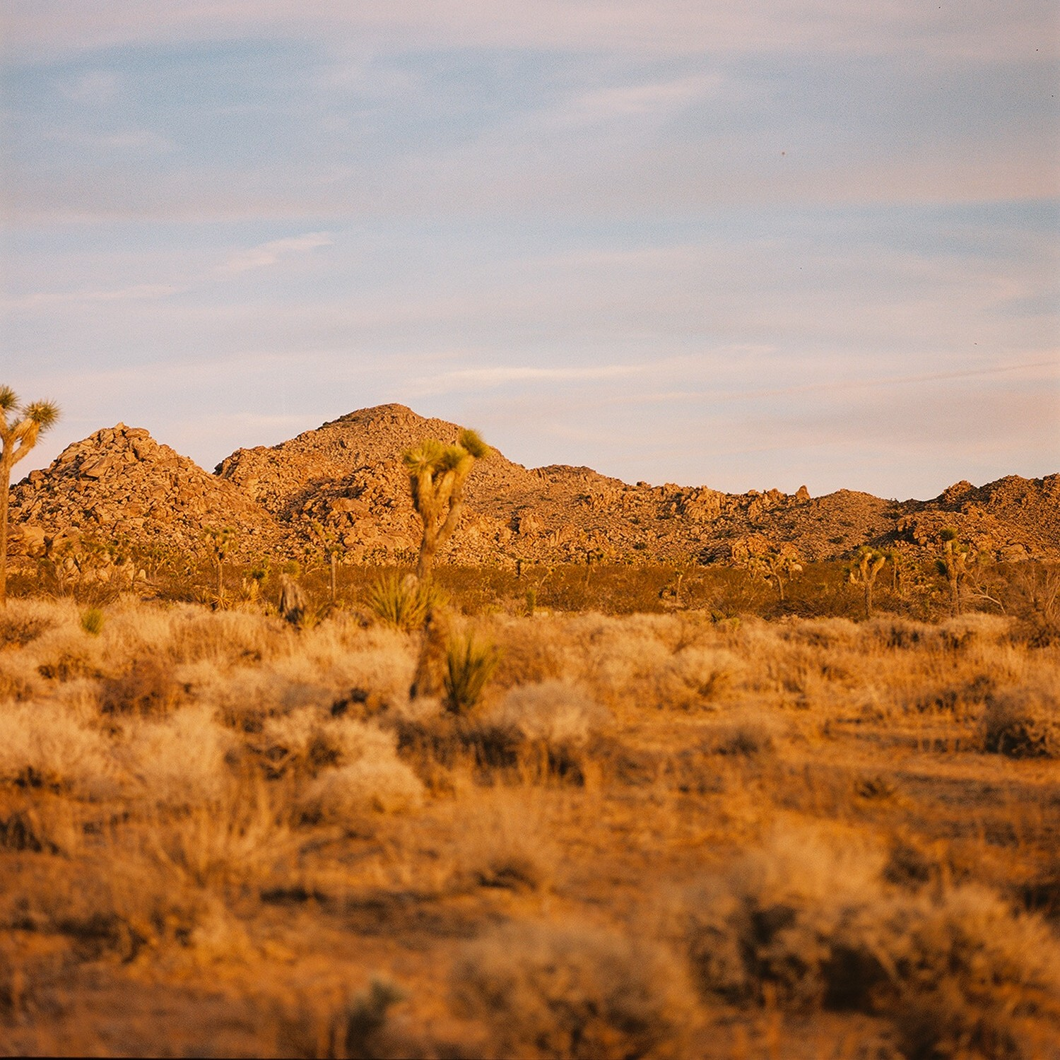 Joshua Tree national park landscape with rocks at sunset in Southern California