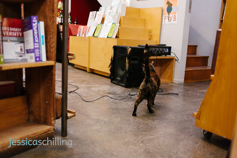 cat at book reading at Skylight Books Los Angeles