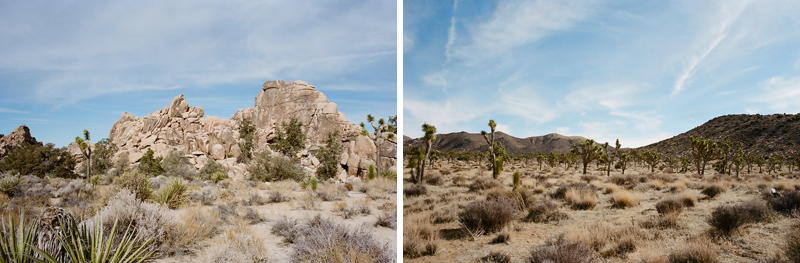 Joshua Tree film photography by LA wedding photographer