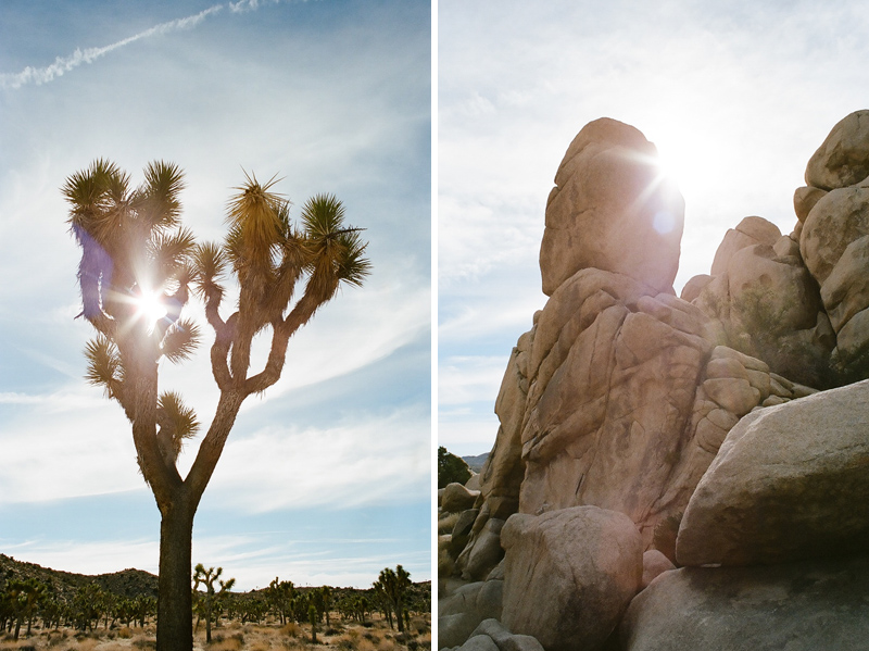 Unique California wedding and film photography Joshua Tree travel photos