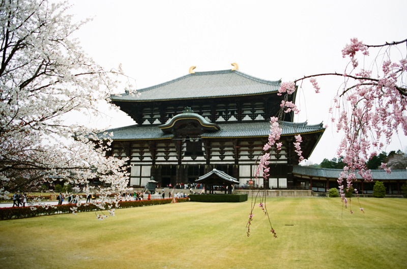 Todaiji Temple in Nara. Japan travel photography 35mm film.