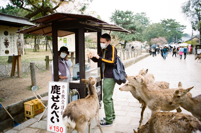 Feeding the deer at the deer park in Nara. Japan travel photography.