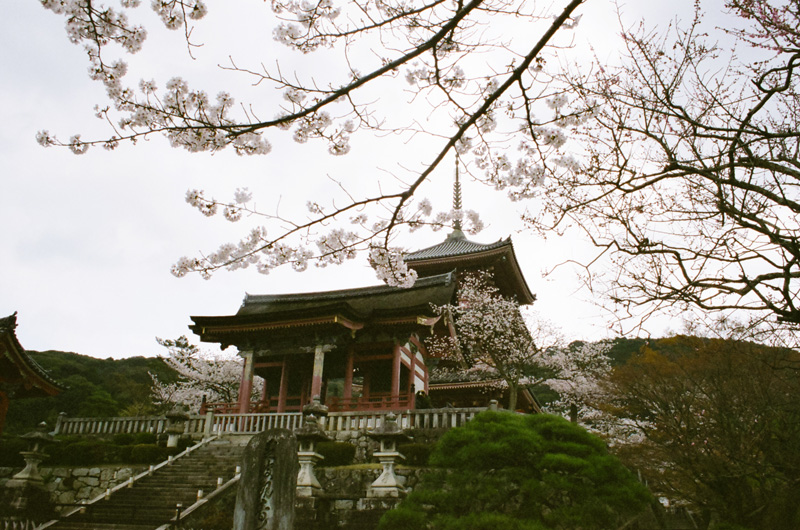 Amazing Kiyomizu Dera Temple in Kyoto during cherry blossom season.