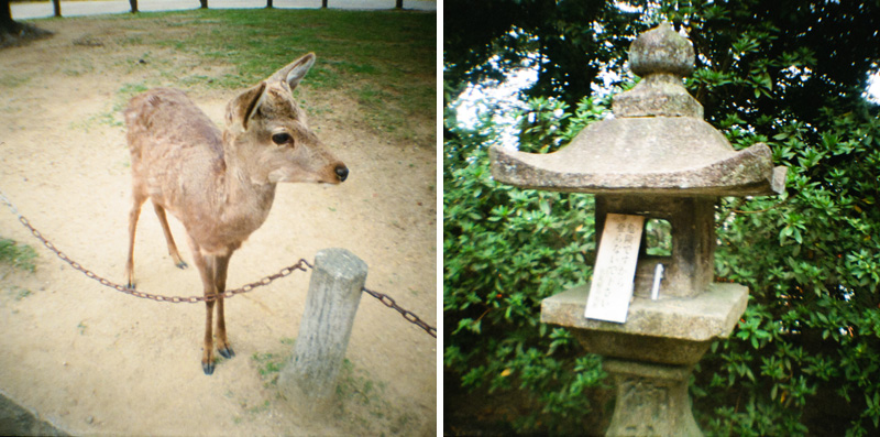 Nara deer and shrine lantern on Diana Mini toy camera 35mm film.