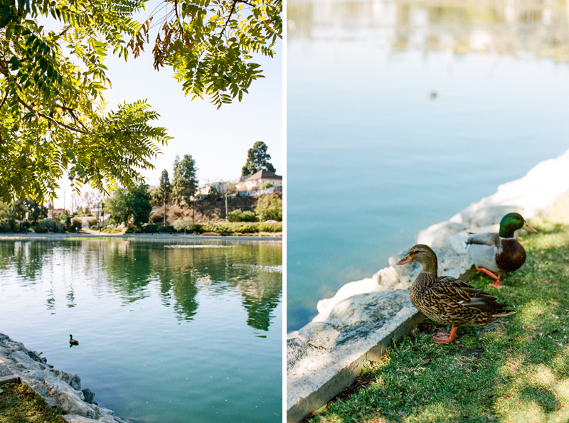 Echo Park Lake ducks. 35mm film photography. Portra 400.