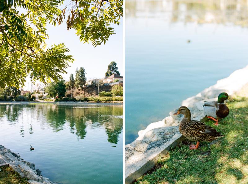 Echo Park Lake ducks. 35mm film photography. Portra 400.