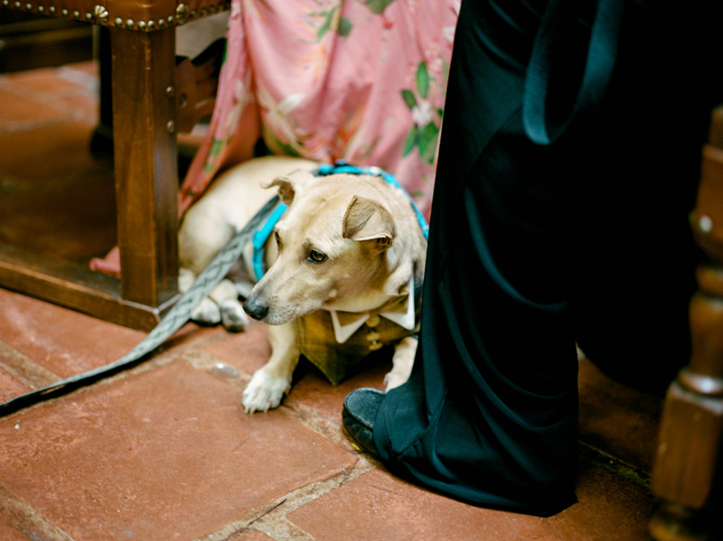 Santa Barbara elopement with cute dog