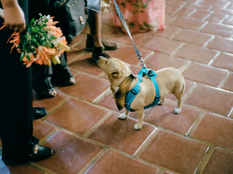 Intimate lesbian wedding in Santa Barbara with couple's dog