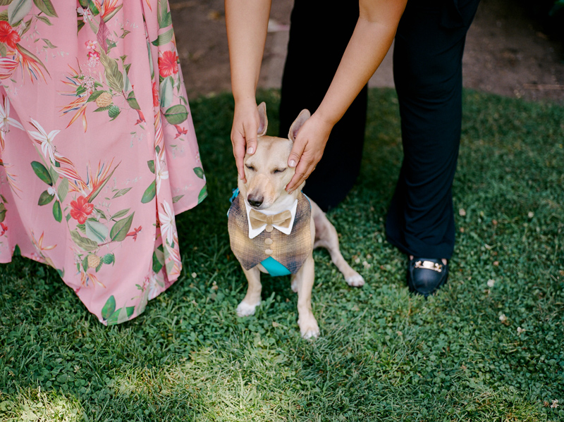 cute funny dog at outdoor elopement