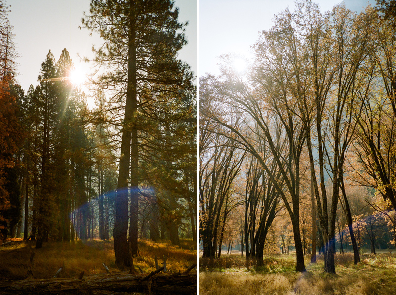 Yosemite in autumn. California outdoor destination elopement photographer.