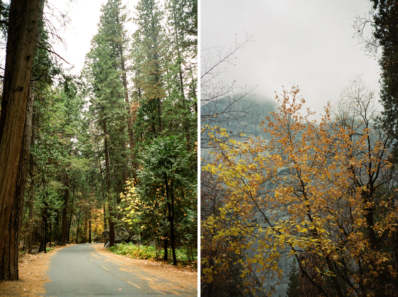 Fall leaves and colors in Yosemite National Park on 35mm film. Kodak Gold 800
