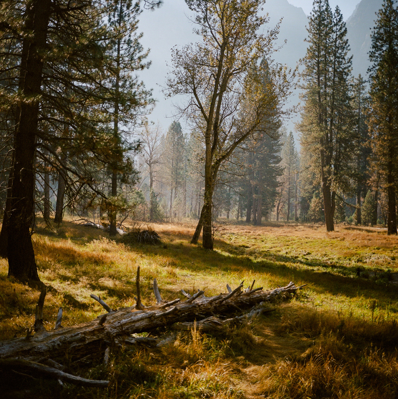 Fall in Yosemite National Park on medium format film - Kodak Portra 400