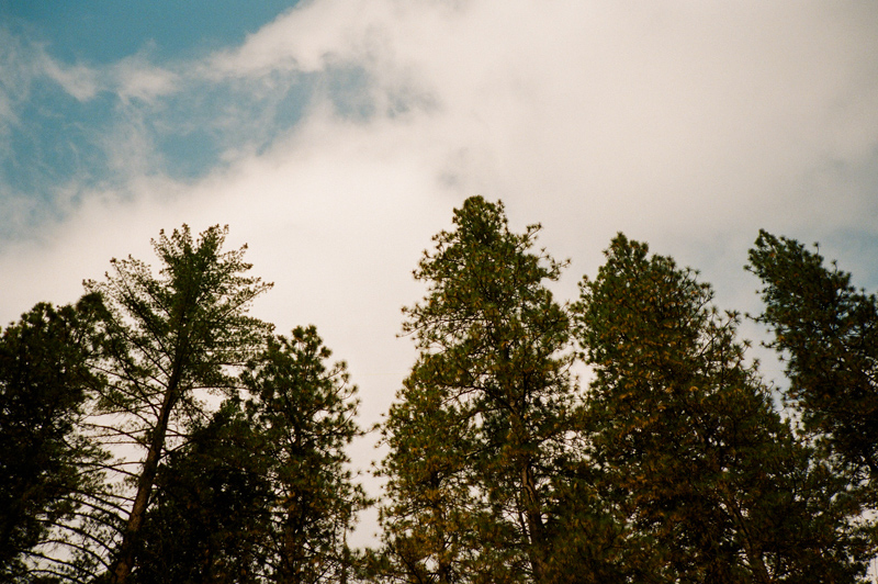 Trees and sky. Yosemite national park by film photographer Jessica Schilling
