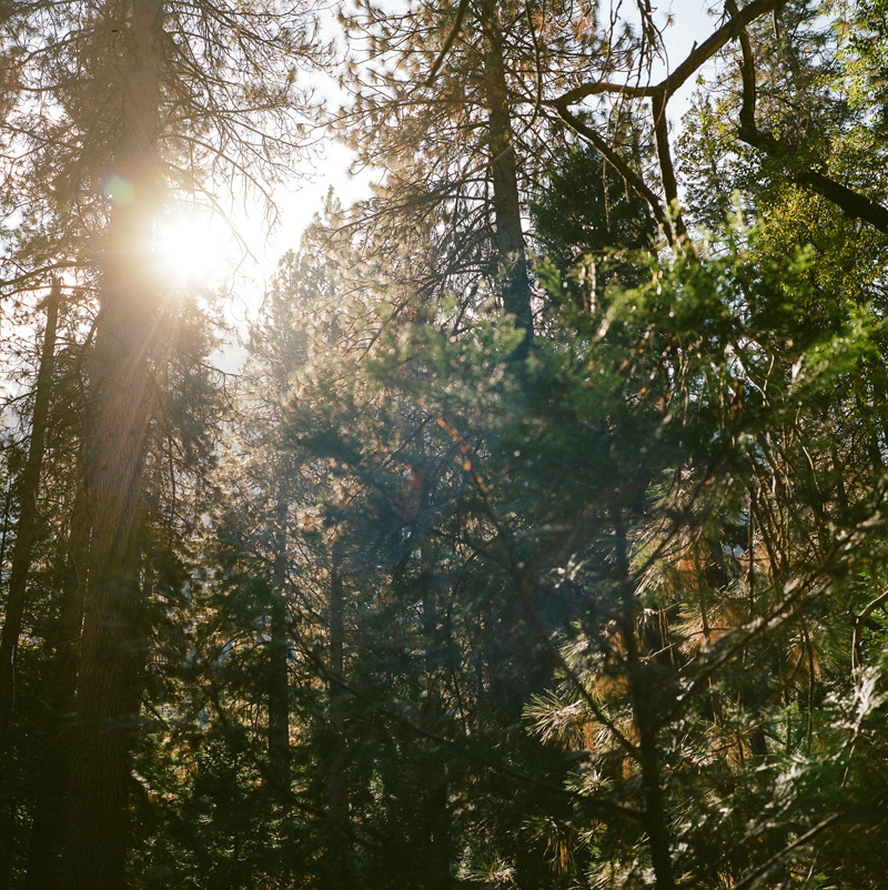 Sequoias and redwoods at Yosemite National Park by film photographer Jessica Schilling