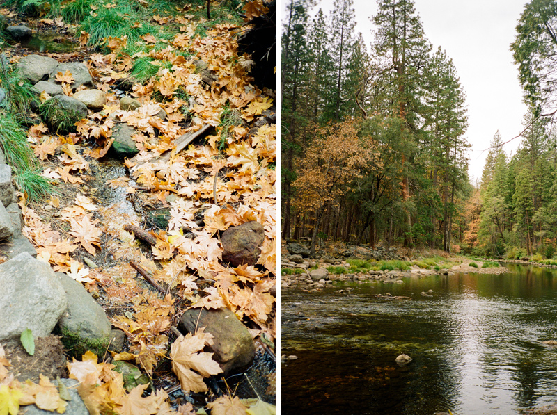 Fall colors on film in Yosemite National Park. Nature and travel photographer Jessica Schilling