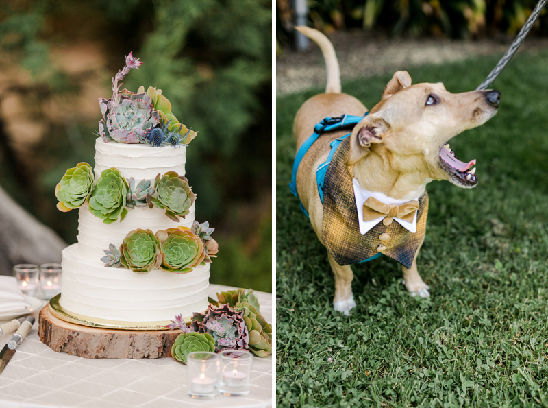 Succulent wedding cake and a dog in a bowtie at California outdoor elopements.